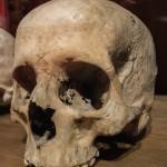 skull-663649_1280